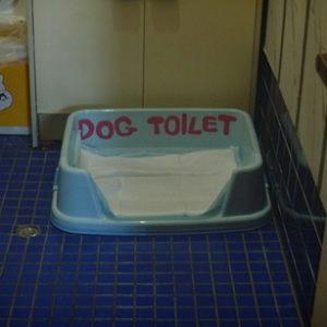 ワンちゃん用トイレ